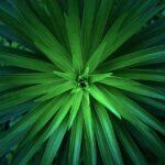 green-1245733_960_720